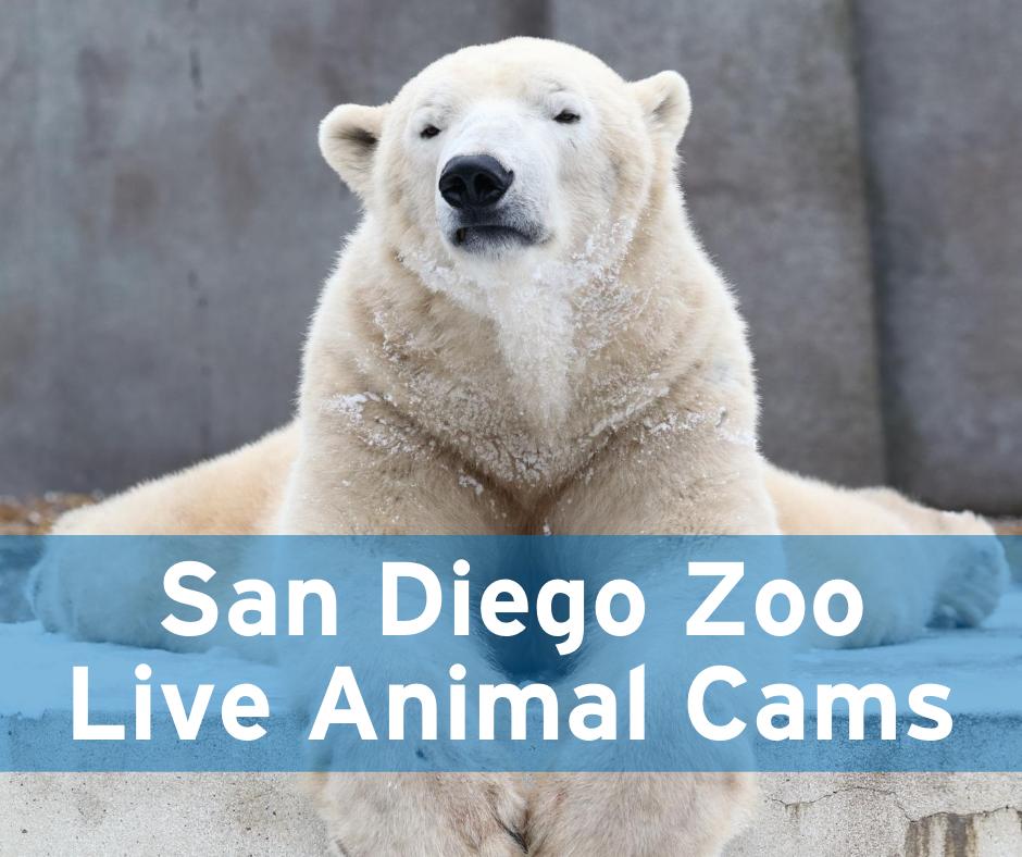 San Diego Zoo Live Animal Cams